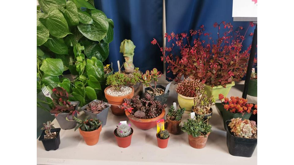 Cactus and Succulent Society Manawatū Branch
